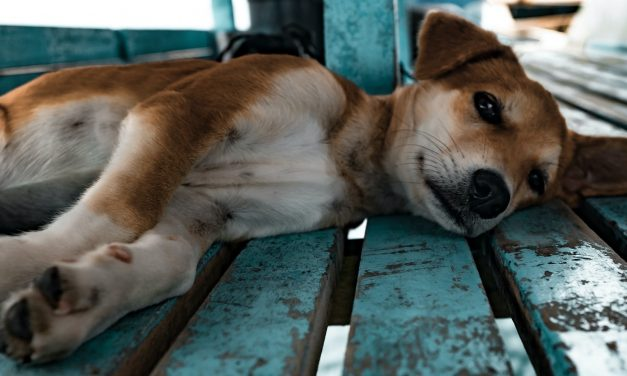 """""""We wouldn't let a dog suffer like this """": What can doctors learn from veterinarians' experience of carrying out euthanasia in companion animals?"""